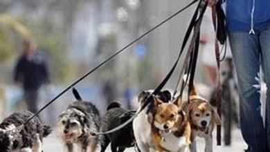 سگ گردانی در تهران ممنوع شد - خبرگزاری بازتاب نو