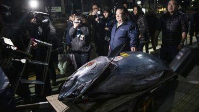 گران ترین ماهی دنیا در ژاپن - اخبار - بازتاب نو