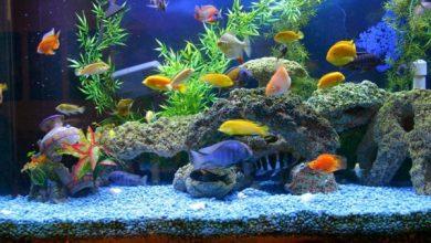 نگهداری از ماهی قرمز در عید نوروز و ارتباط آن با باکتری سالمونلا - اخبار ایران - اخبار جهان - خبرگزاری بازتاب نو
